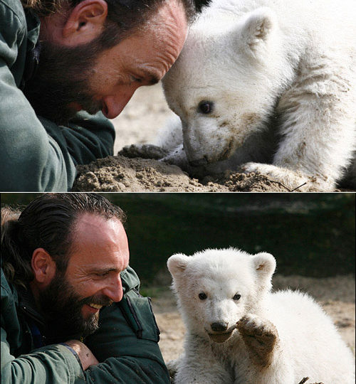 Rest in Peace: Knut the polar bear